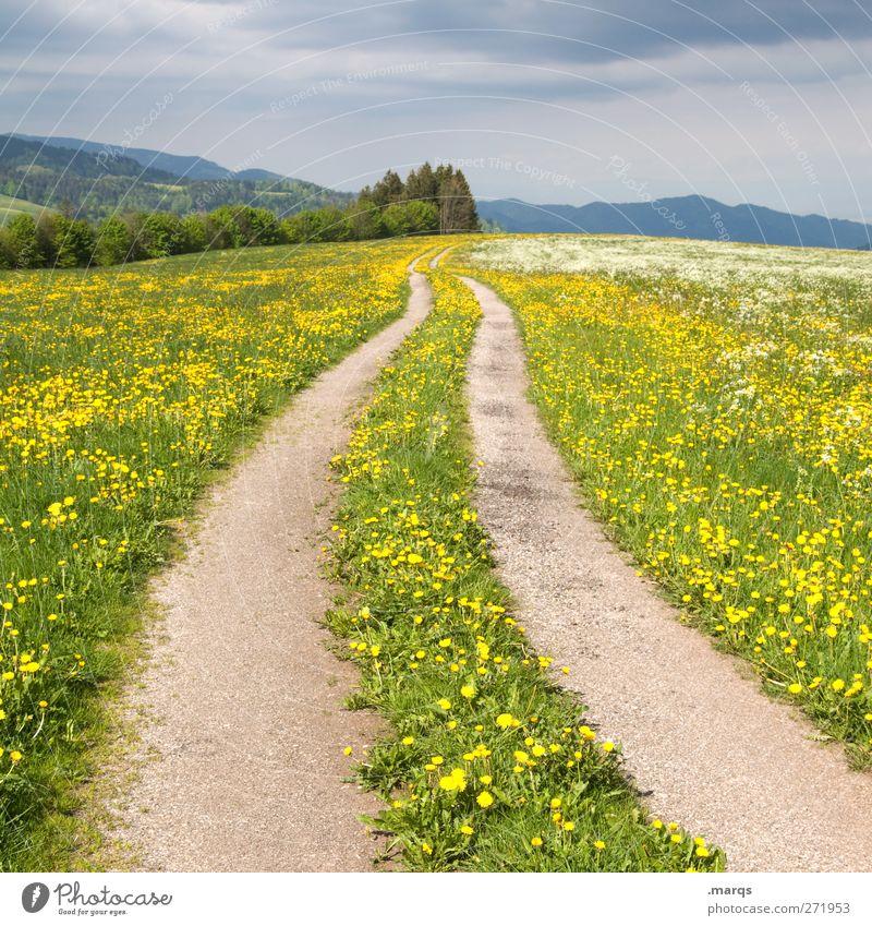 Ausweg Natur schön Sommer Blume Umwelt Landschaft gelb Straße Wiese Gefühle Wege & Pfade Verkehr Perspektive Zukunft Ziel Spuren