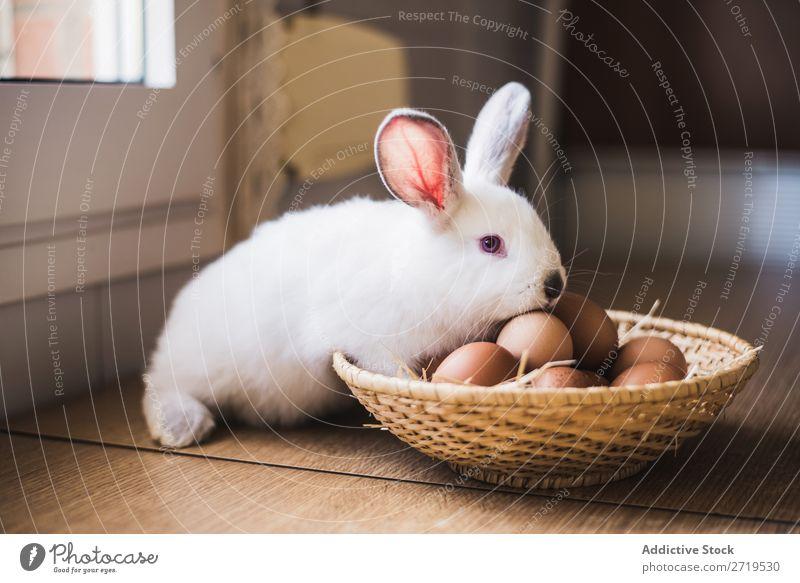 Kleine Hasen- und Hühnereier Hase & Kaninchen niedlich Ei Hähnchen Tier Pelzmantel