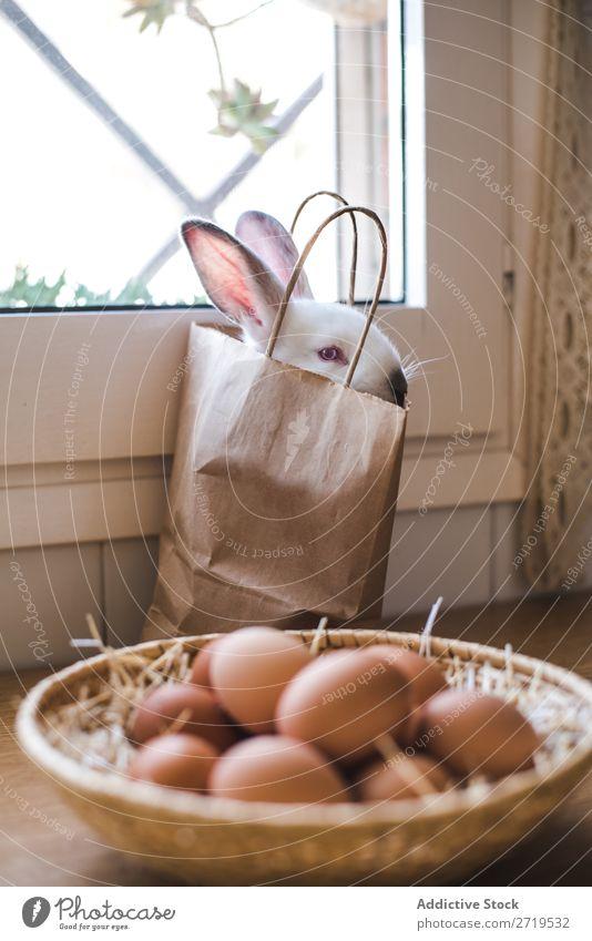 Süßes weißes Kaninchen in Papiertüte Hase & Kaninchen niedlich sitzen Tüte Ei Hähnchen