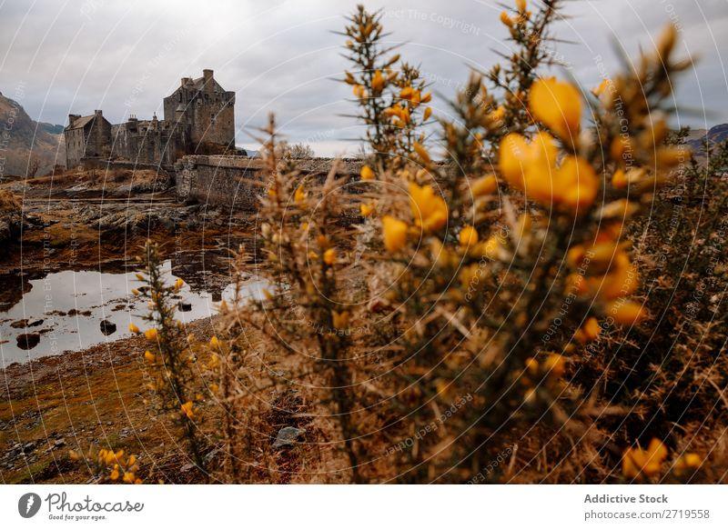 Blumen und Schlossansicht Pflanze Burg oder Schloss Küste Felsen See Hügel Berge u. Gebirge