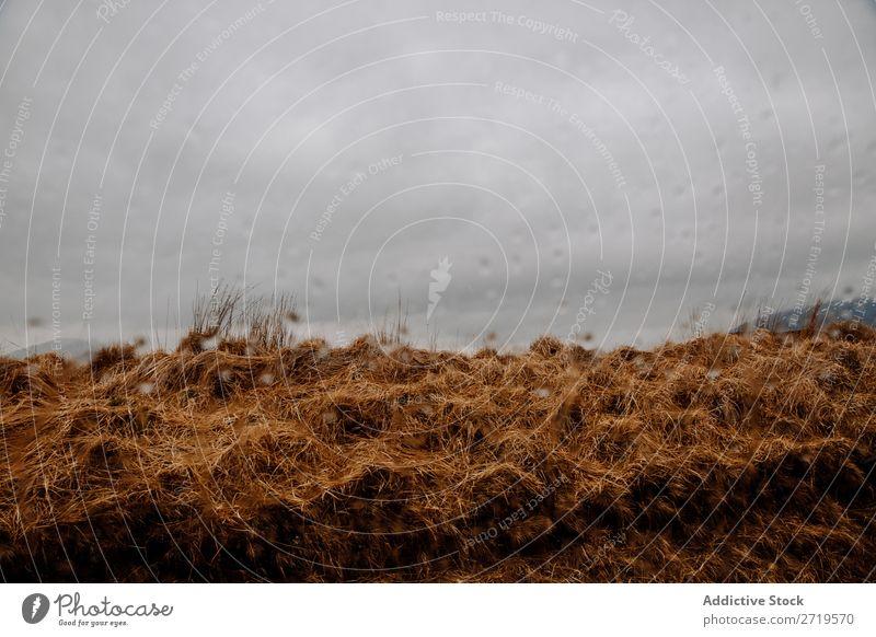 Neblige Berge und trockenes Gras Berge u. Gebirge Wolken regenarm Natur Landschaft natürlich Ferien & Urlaub & Reisen Felsen Tourismus Stein Schottland Wald