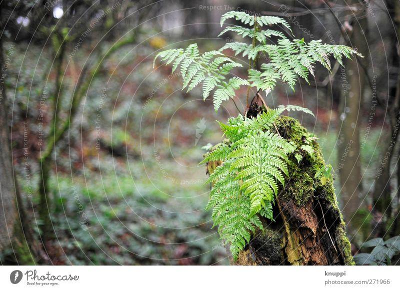 Regen-Wald Umwelt Natur Pflanze Urelemente Wasser Wolken Sonnenlicht Sommer Wetter schlechtes Wetter Baum Sträucher Moos Efeu Farn Grünpflanze Wildpflanze Hügel