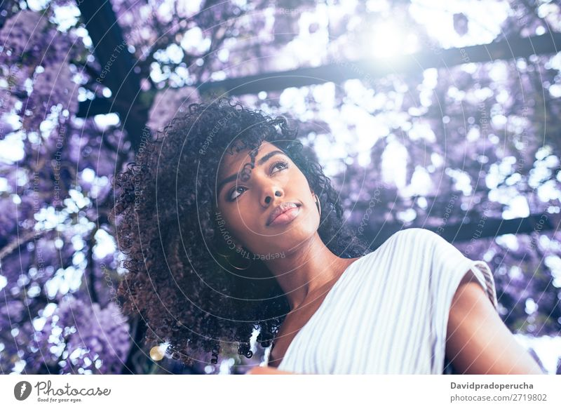 Junge schwarze Frau umgeben von Blumen Blüte Frühling Fliederbusch Porträt multiethnisch Afrikanisch Person gemischter Abstammung Lächeln hintergrundbeleuchtet