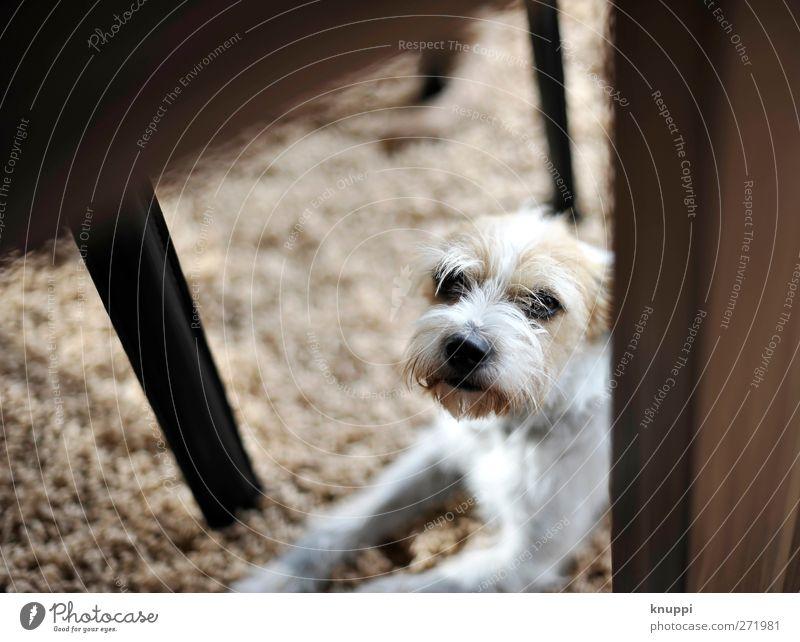 """hide and seek (für """"knallgrün"""") Hund weiß Tier schwarz Glück klein Tierjunges braun liegen wild warten beobachten Fell Freundlichkeit Tiergesicht Haustier"""