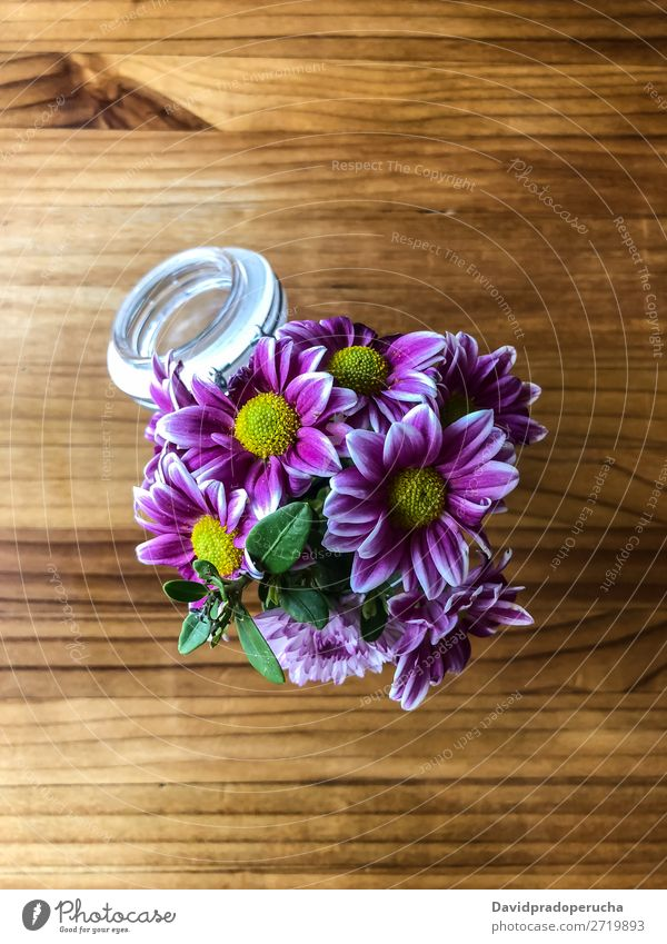 Draufsicht auf violette Margeriten im Glas Natur Frühling schön rosa Beautyfotografie Hintergrundbild geblümt Blütenblatt weiß Pflanze Blume Gänseblümchen
