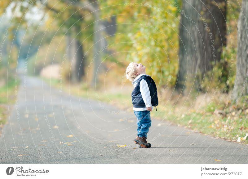 oben. Freude Glück Kinderspiel maskulin Kleinkind Kindheit 1 Mensch 3-8 Jahre Umwelt Natur Herbst Schönes Wetter Baum Blume Gras Sträucher blond beobachten