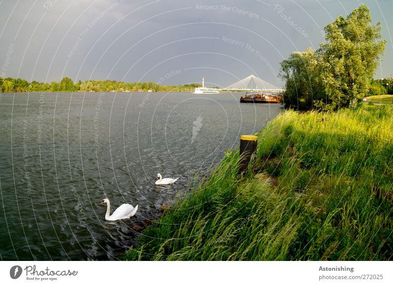 Wetterumschwung Umwelt Natur Landschaft Pflanze Tier Erde Wasser Himmel Wolken Sommer Klima Unwetter Wind Wärme Baum Gras Sträucher Fluss Donau Wildtier Flügel