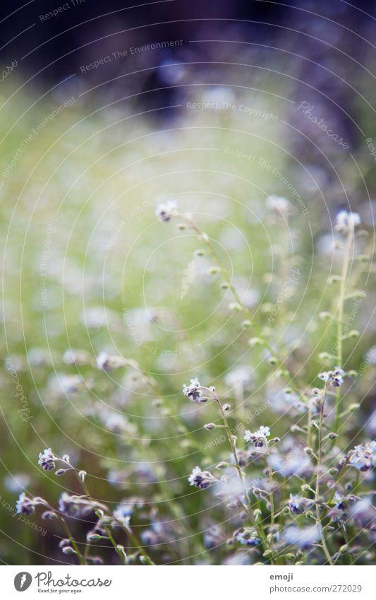 lilalu Natur grün Blume Umwelt Wiese Gras Frühling natürlich Sträucher violett