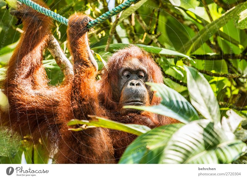 mir ist das eindeutig zu früh! Ferien & Urlaub & Reisen Natur Baum Tier Blatt Ferne Umwelt Traurigkeit Tourismus außergewöhnlich Freiheit Ausflug Wildtier