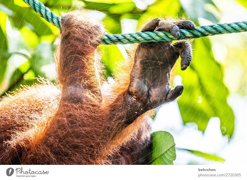 fingerspitzengefühl Mensch Ferien & Urlaub & Reisen Baum Tier Blatt Ferne Tourismus außergewöhnlich Freiheit Ausflug Wildtier Abenteuer Finger fantastisch