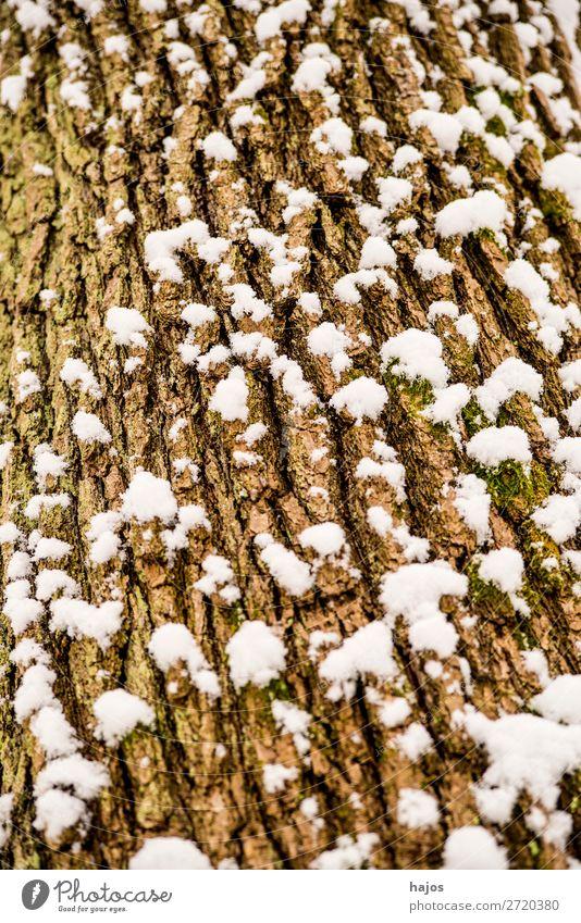 Eiche, Rinde mit Schnee Winter Pflanze Wetter Baum braun weiß verschneit Jahreszeit Riss Nahaufnahme Flora Deutschland Schneehaube Farbfoto Außenaufnahme