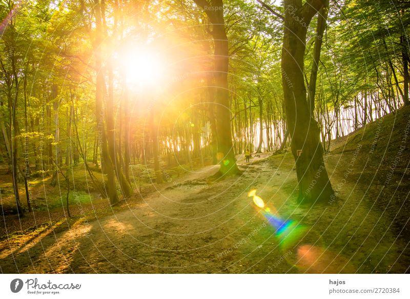 Wald an der Ostseeküste in Polen im Gegenlicht Natur Schönes Wetter Moos Küste hell grün Sonnenstrahlen Reflexion & Spiegelung Laubwald Düne Küstenwald