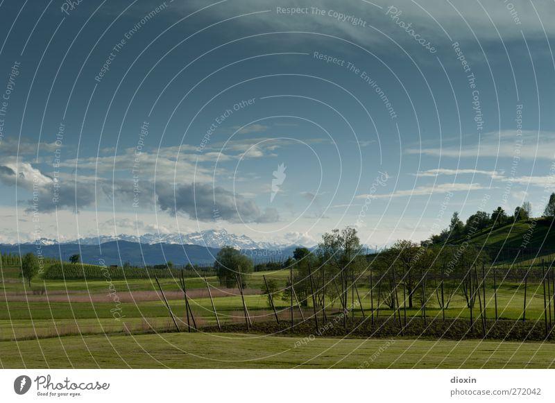Landschaft mit Hopfenfeld Landwirtschaft Forstwirtschaft Umwelt Natur Pflanze Himmel Wolken Frühling Baum Gras Nutzpflanze Wiese Feld Hügel Alpen