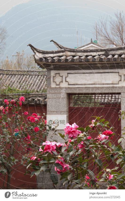 ChinaGarten Pflanze Blume Rose Blatt Blüte exotisch Park Menschenleer Tor ästhetisch außergewöhnlich positiv schön Abenteuer Idylle Chinesischer Garten