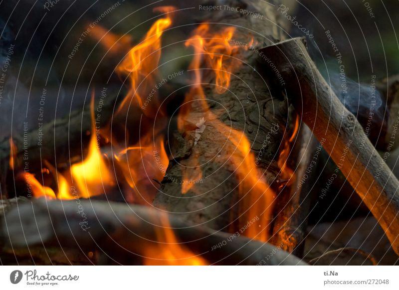 Wo sind die Würstchen Baum leuchten heiß grau orange rot schwarz Feuerstelle Lagerfeuerstimmung brennen Brennholz Farbfoto Außenaufnahme Nahaufnahme Abend