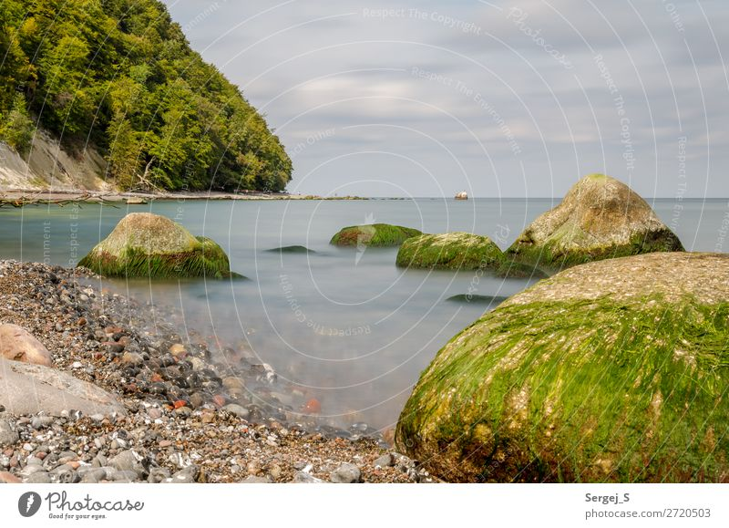 Am Fuße des Königsstuhls Umwelt Natur Landschaft Pflanze Urelemente Wasser Himmel Wolken Horizont Sommer Baum Moos Wald Küste Strand Ostsee Insel Rügen