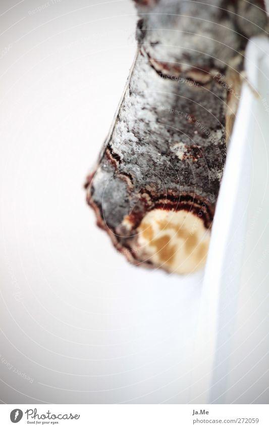 Ein Mondvogel kam zu Besuch :-) Tier ästhetisch Flügel Insekt Schmetterling Nutztier Motte