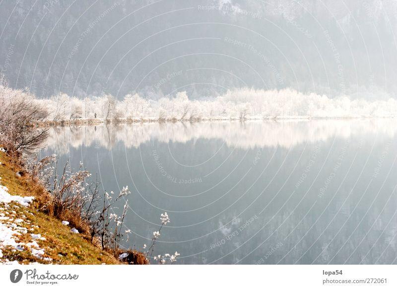 Spätherbst am Fluss harmonisch ruhig Winter Schnee Umwelt Natur Landschaft Wasser Sonnenlicht Schönes Wetter Eis Frost Baum Wald Flussufer See weiß Farbfoto