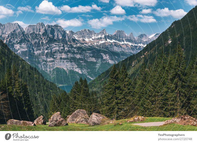 Berggipfel mit grünem Wald und Felsen in den Schweizer Alpen ruhig Sommer Berge u. Gebirge Natur Landschaft Schönes Wetter Gipfel Idylle Gasse alpin