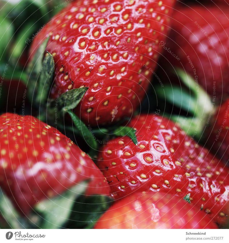 Sommersnack Natur grün rot Gesundheit Frucht Lebensmittel frisch Ernährung leuchten lecker Bioprodukte saftig Erdbeeren füttern Snack