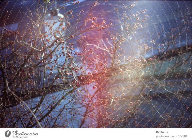 glanz Baum Dach Schornstein weich Ast Zweig Geäst Blattknospe Reflexion & Spiegelung Farbfoto Außenaufnahme Menschenleer Lichterscheinung Sonnenlicht