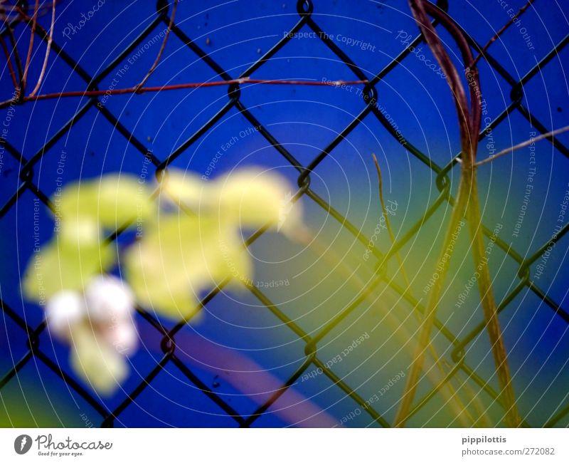 BLUE blau Pflanze Einsamkeit ruhig gelb Wand Mauer Traurigkeit träumen Angst Schilder & Markierungen Wachstum Sträucher trist Hoffnung bedrohlich