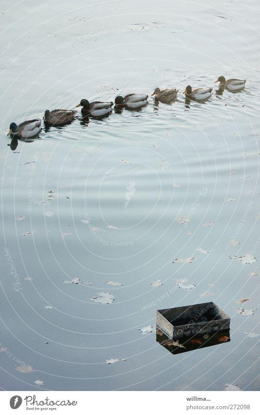die schatzsucher Ente Teich Ententeich Tiergruppe Kasten Schwimmen & Baden Zusammensein Abenteuer entdecken Teamwork Zusammenhalt Ausflug Schatztruhe