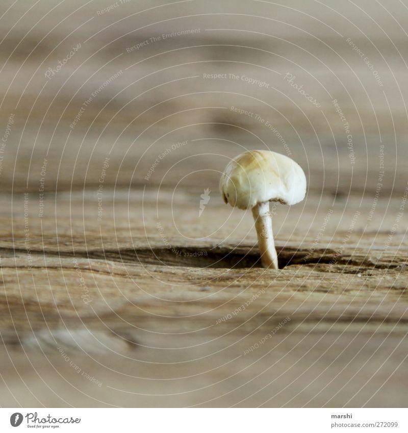Pilzkopf Holz braun Ernährung Wachstum Holztisch Makroaufnahme Tisch