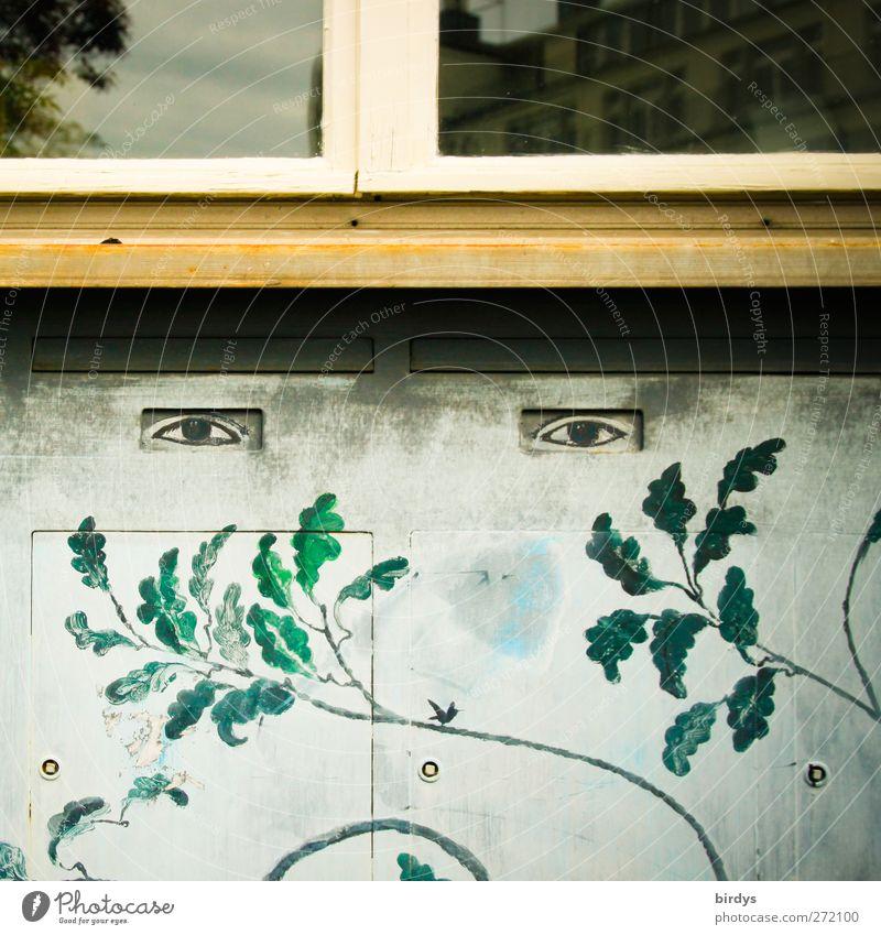 Sehende Wände Pflanze Blatt Auge Fenster Stil lustig Fassade außergewöhnlich Kreativität Gemälde Gesichtsausdruck Fensterbrett Wandmalereien Fassadenbegrünung