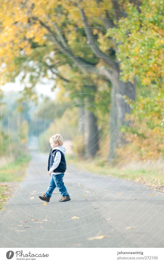 links schön Leben Spielen Kind maskulin Kleinkind Kindheit 1 Mensch 3-8 Jahre Umwelt Natur Landschaft Sonne Herbst Schönes Wetter Pflanze Baum Gras Sträucher