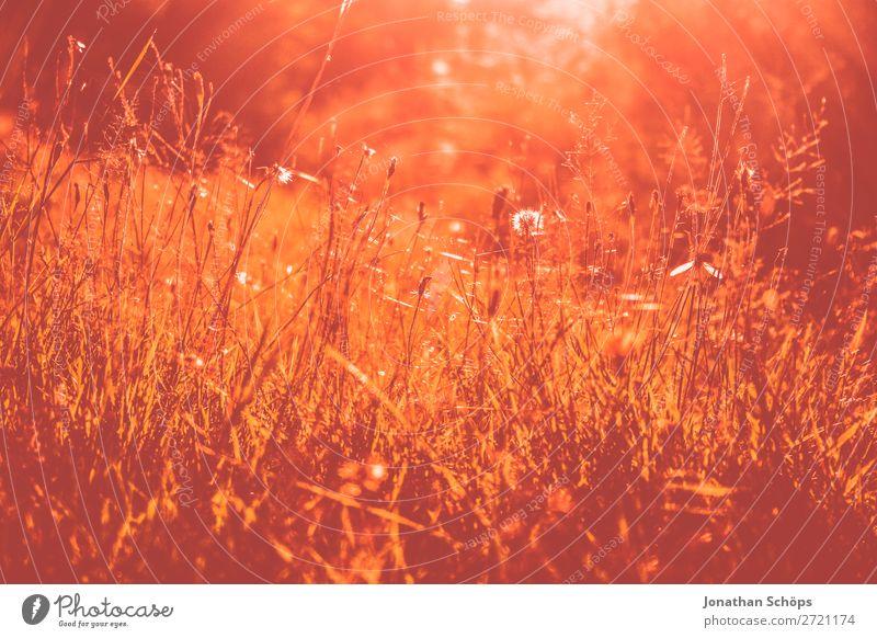 Nahaufname wilde Wiese Natur Landschaft Gras orange rosa Blumenwiese Korallen Farbkarte
