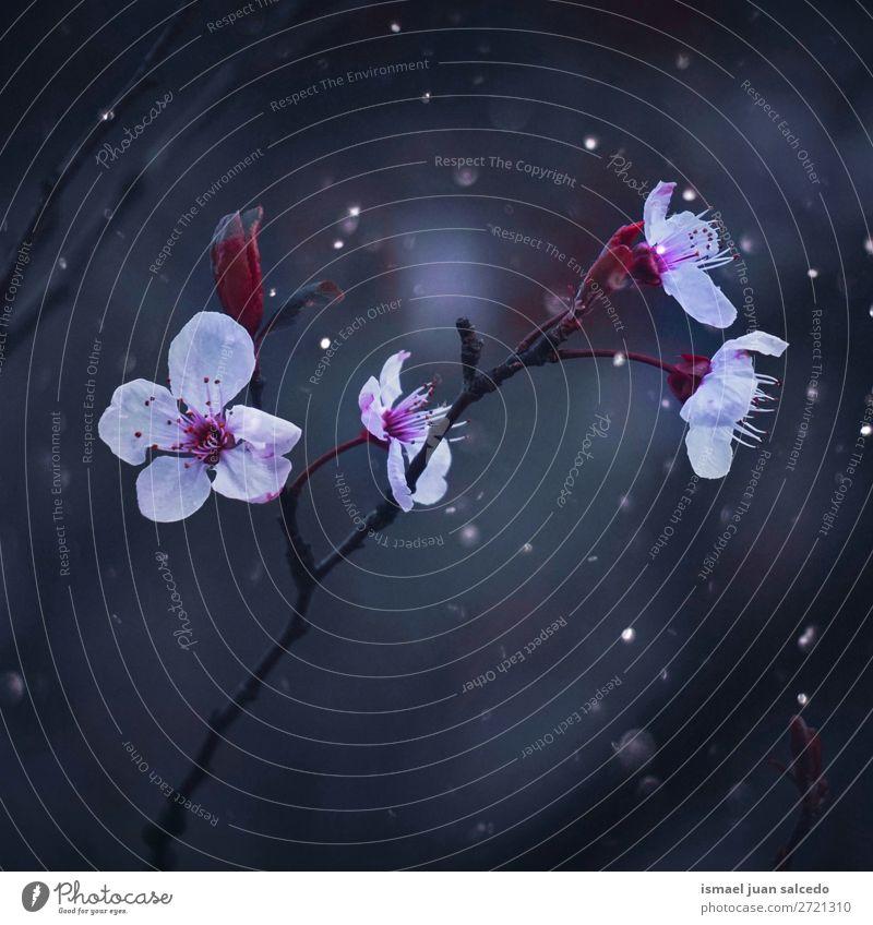 rosa Blumen Blütenblatt Pflanze Garten geblümt Natur Dekoration & Verzierung romantisch Beautyfotografie Zerbrechlichkeit Hintergrund Frühling Sommer Winter