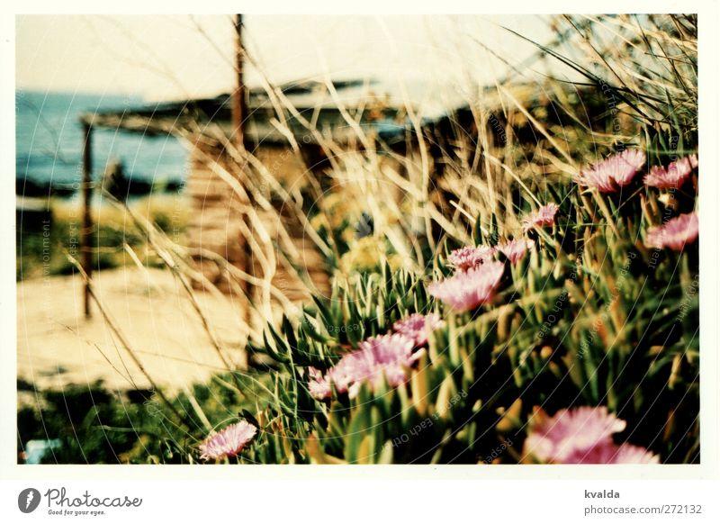 Sommer Natur Wasser Ferien & Urlaub & Reisen grün Pflanze Meer ruhig Erholung Gras Blüte braun rosa Insel Ausflug Hügel
