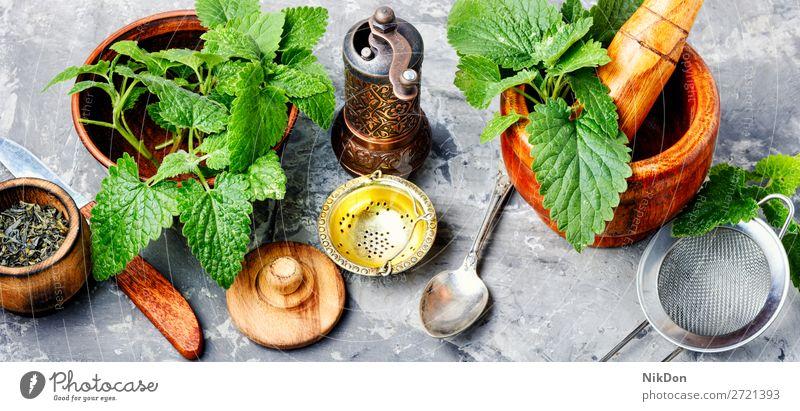 Melissenblatt oder Zitronenmelisse Kraut Kräutermedizin Kräuterkunde Pflanze natürlich Kräuterbuch Gesundheit grün frisch Medizin Tee Natur aromatisch Blatt