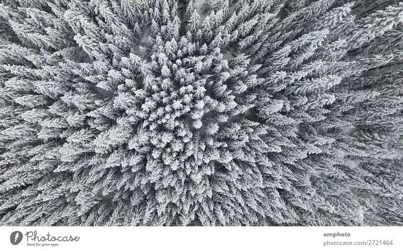 Natur Pflanze weiß Landschaft Baum Wald Winter Berge u. Gebirge Schnee frisch Eis Wetter Aussicht Jahreszeiten Frost gefroren