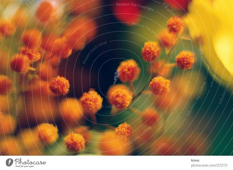 lustige blüten Pflanze rot Blüte orange rund Blumenstrauß