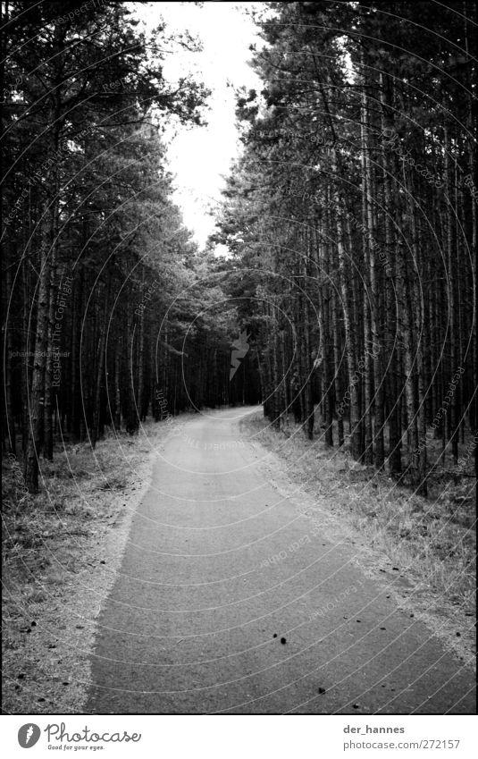 radweg Baum Wald Wege & Pfade klein sportlich Verkehrswege Fahrradfahren Wildpflanze Fahrradweg