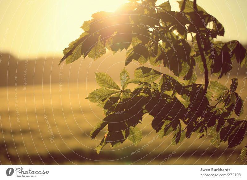 Ein Hauch von Sommer Natur Pflanze grün Sonne Landschaft Blatt Umwelt gelb Frühling Herbst Luft Feld Wachstum gold Klima