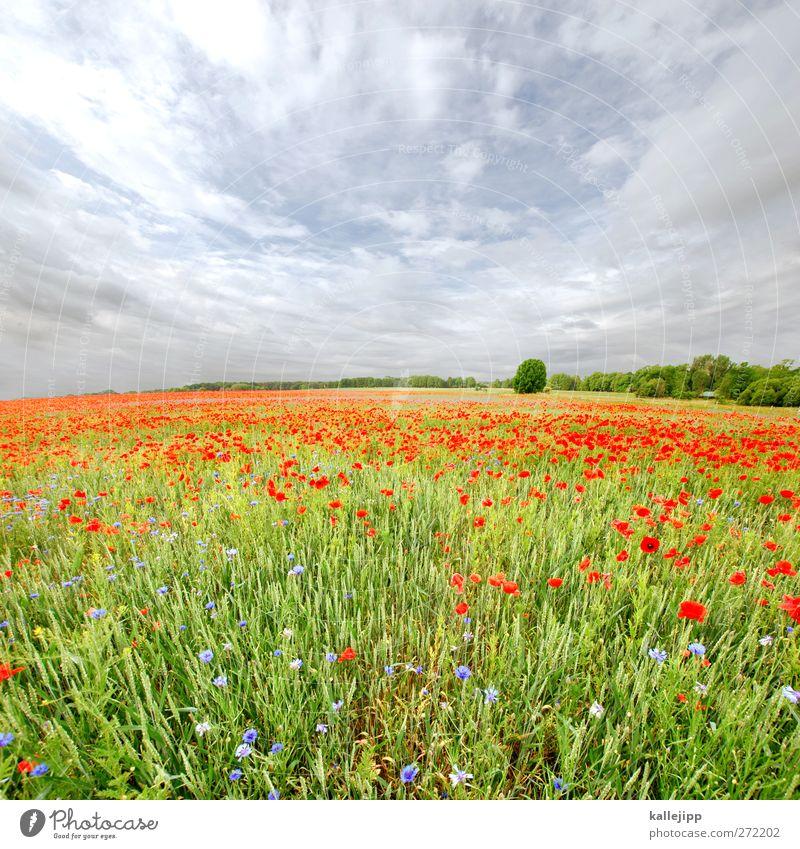 heuschnupfen mit windpocken Himmel Natur grün Baum rot Pflanze Sommer Blume Tier Wolken Umwelt Landschaft Wiese Gras Freiheit Horizont