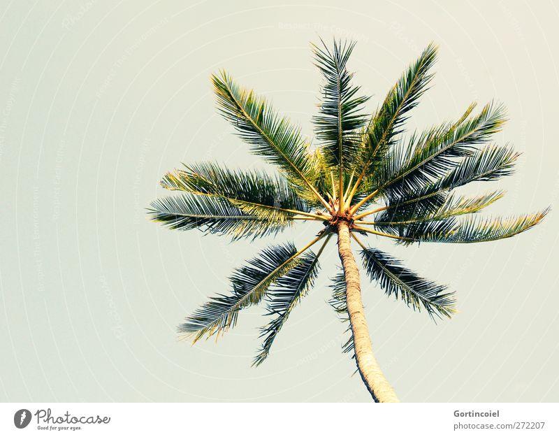 Bali Palm Wolkenloser Himmel Sommer Schönes Wetter Pflanze Baum Fernweh Palme Ferien & Urlaub & Reisen Urlaubsfoto Palmenwedel sommerlich Urlaubsstimmung