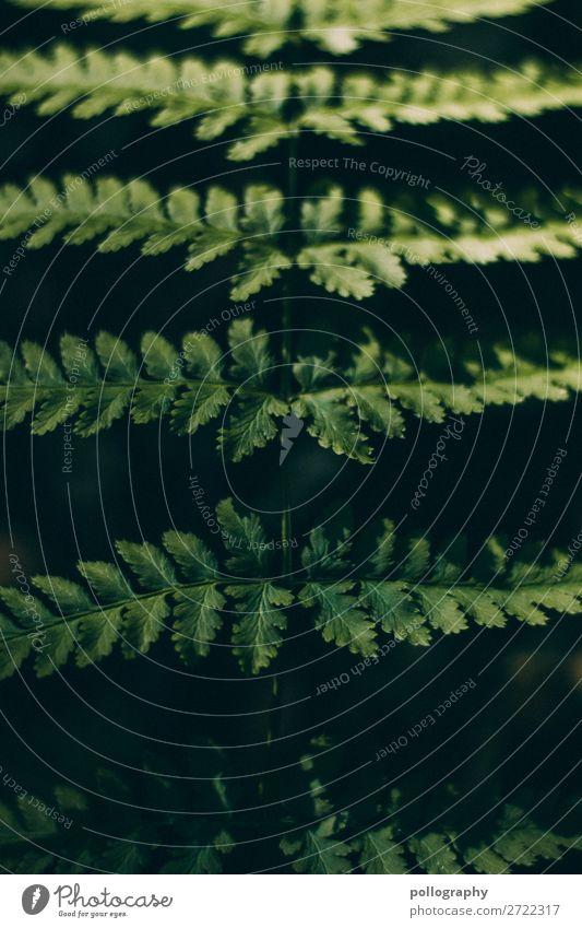 Farn Pflanze im Detail Farnblatt Natur grün Umwelt Wachstum Botanik natürlich Naturliebe Naturerlebnis Echte Farne Frühling Grünpflanze Detailaufnahme