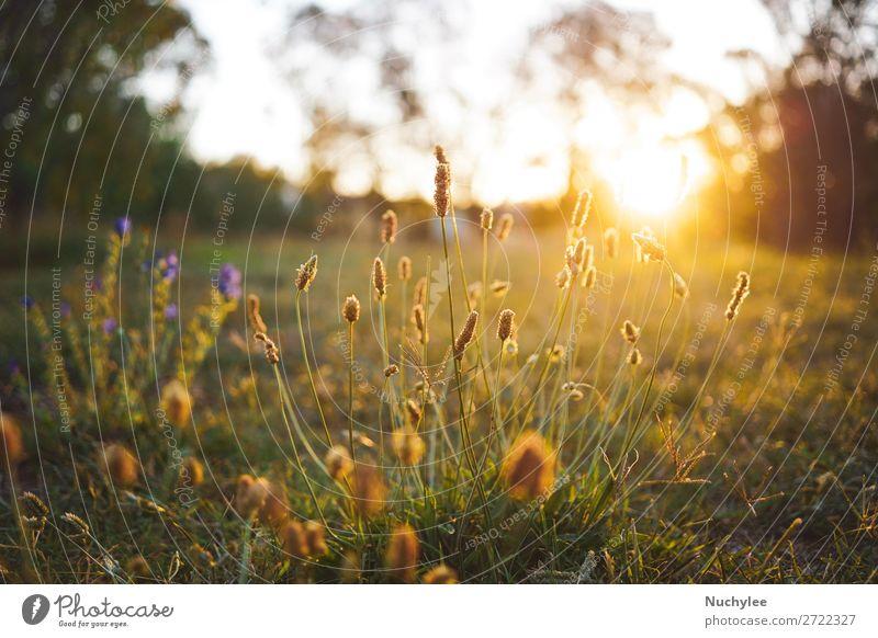 Feldblume auf einer grünen Wiese im Frühjahr oder Sommer schön Sonne Garten Natur Pflanze Himmel Frühling Baum Blume Gras frisch natürlich gold weiß Farbe