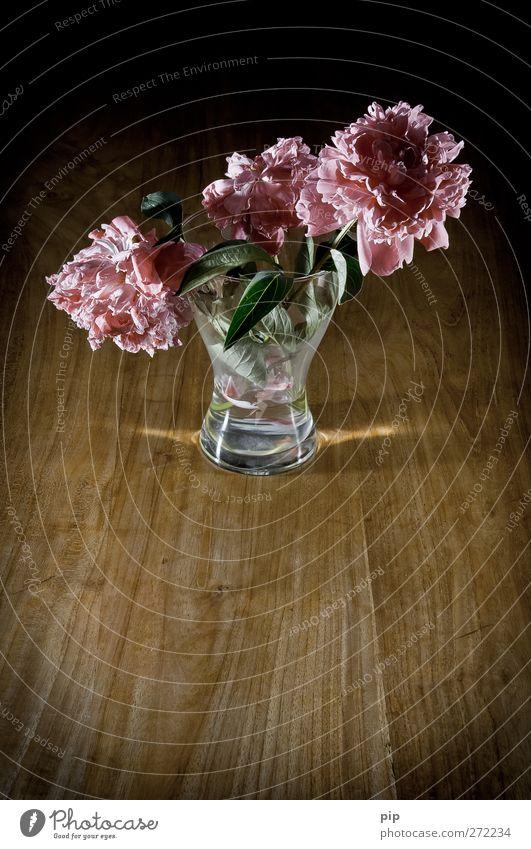 verblüht Blume Blatt Blüte Pfingstrose Blumenvase Holz Glas alt ästhetisch Traurigkeit Trauer Vergänglichkeit welk rosa dunkel Stillleben ruhig zart Farbfoto