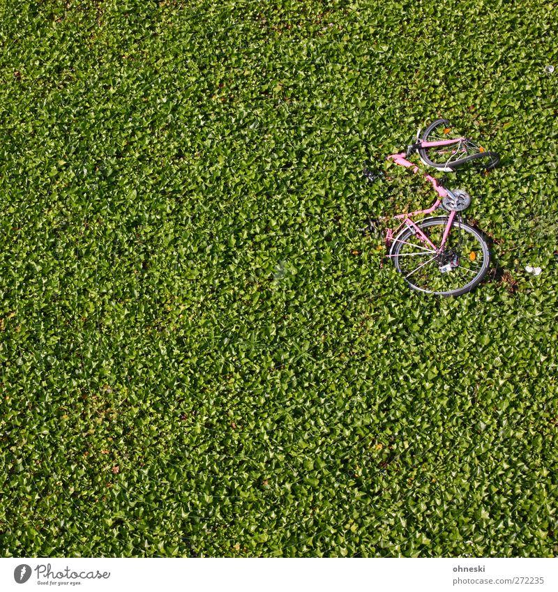 750 - Das Rad... Pflanze Blatt Grünpflanze Bodendecker Hecke Fahrradfahren kaputt grün Unfall Farbfoto Außenaufnahme Strukturen & Formen Menschenleer
