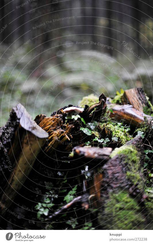 Mikrokosmos Umwelt Natur Pflanze Erde Wasser Wassertropfen Wolken Sonnenlicht Sommer Herbst schlechtes Wetter Regen Baum Moos Efeu Grünpflanze Wildpflanze Wald
