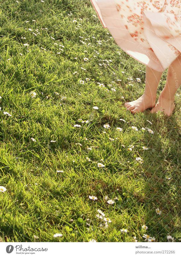 gänseplümelliesel Kind Mädchen Beine Fuß 3-8 Jahre Kindheit Sommer Schönes Wetter Wind Gänseblümchen Wiese Rock Kleid grün rosa Barfuß willma... Farbfoto