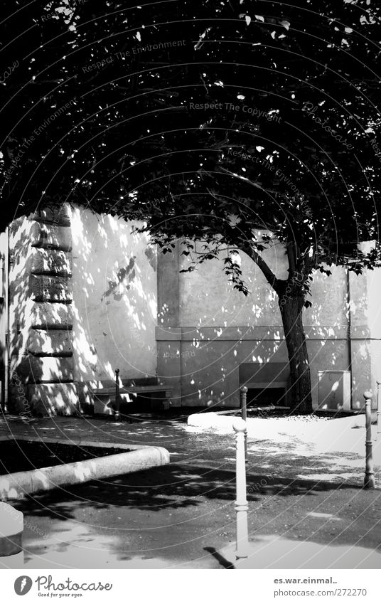 hell dunkel Baum Wachstum Schatten Kontrast Natur Pfosten Schwarzweißfoto