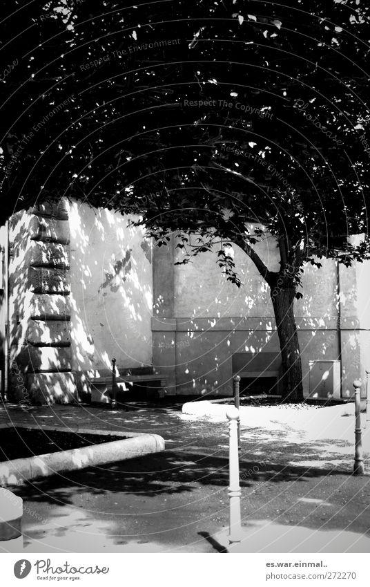 hell dunkel Natur Baum Wachstum Pfosten