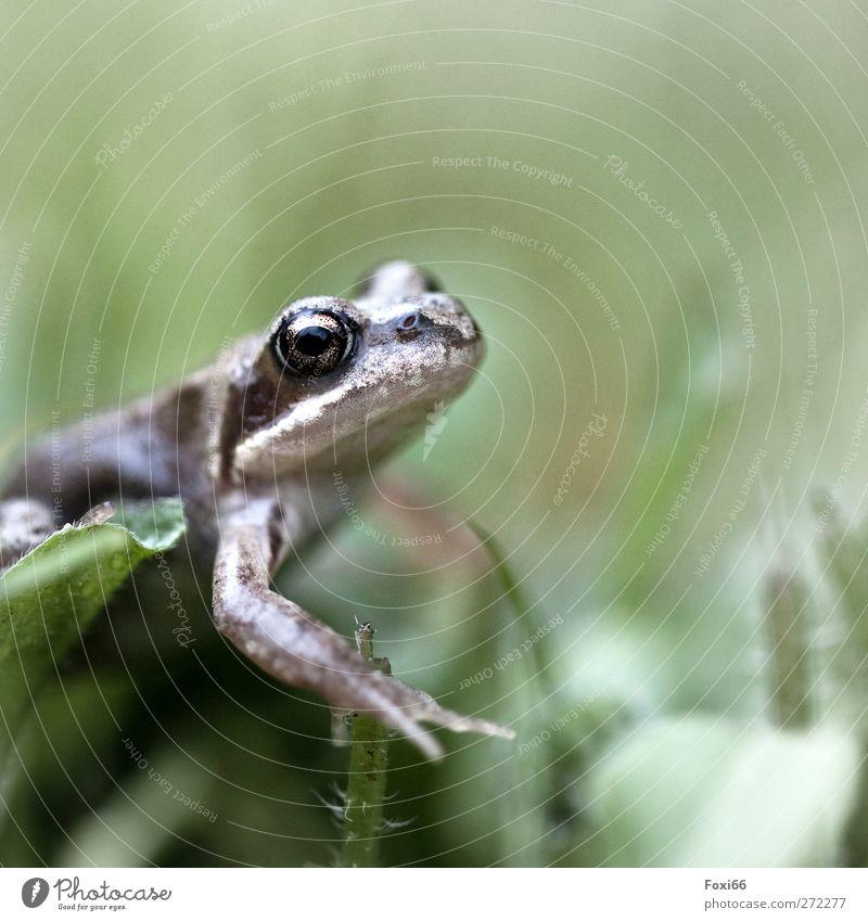 noch mehr Frühlingsquak Wasser weiß grün Tier Wiese kalt Gras klein Garten Luft braun Wildtier natürlich Frosch Begeisterung