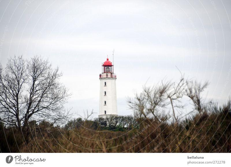 Hiddensee | Rotkäppchen Umwelt Natur Landschaft Pflanze Himmel Wolken Frühling Schönes Wetter Baum Sträucher Küste Ostsee Meer Insel schön Leuchtturm Farbfoto